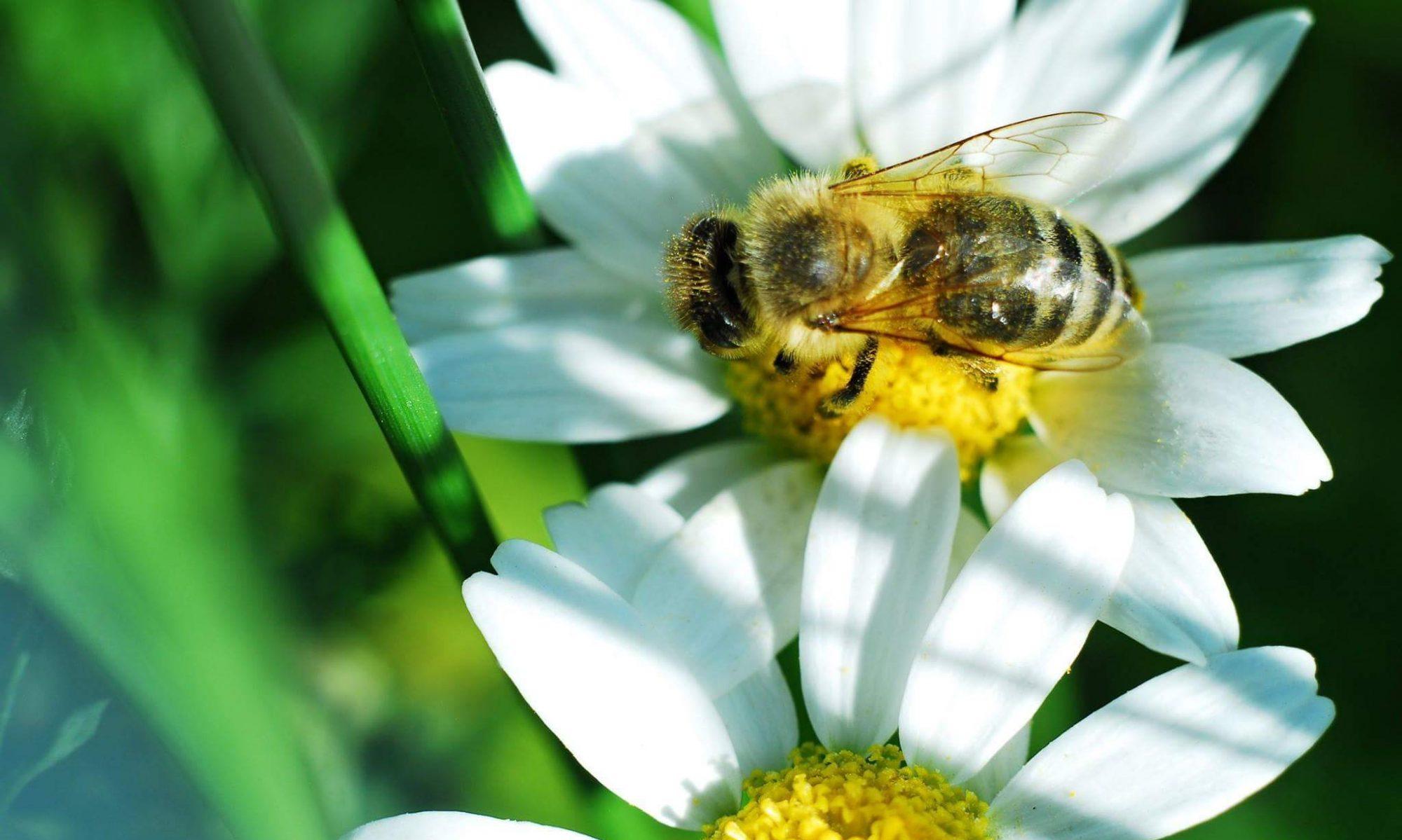 Včelí farma Srch - Jiří Švejda
